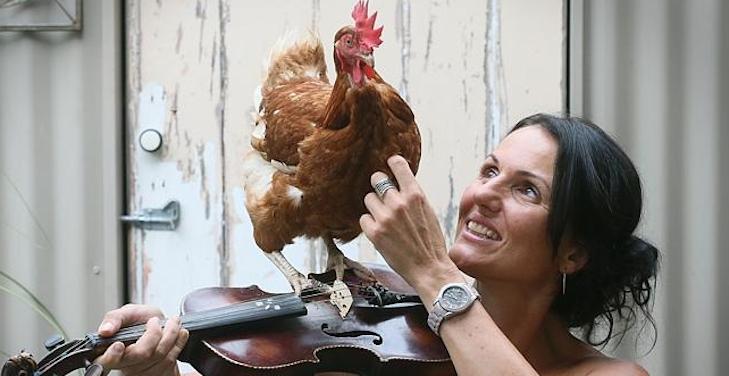 Houden kippen van MNM of van StuBru?