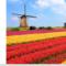 Het Nederlandse Blad: Cijfers, hits en archief (video)